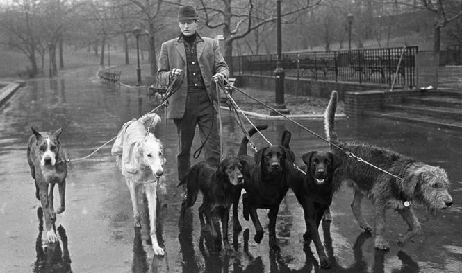 Jim Buck, the man who professionalized dog walking.