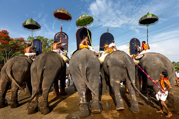 Celebrity elephants in India.